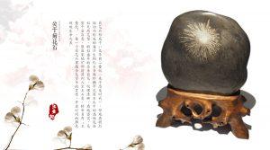 菊花石赏石文化