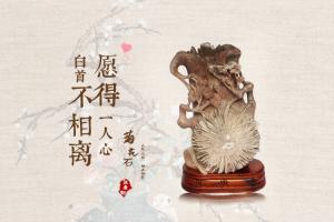 菊石开花与凄美动人的爱情传说