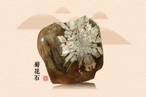 宁静致远 静赏菊花石