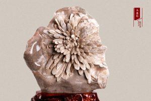 菊花石的软料与硬料