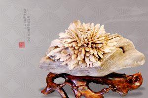 菊花石收藏中悟出的美德
