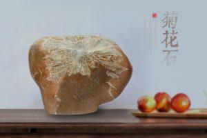 收藏菊花石应注重原石的品质