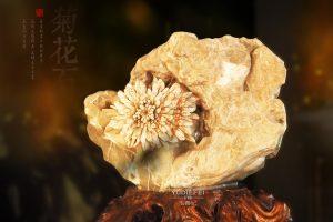 菊花石摆件的魅力:山无石不奇,室无石不雅
